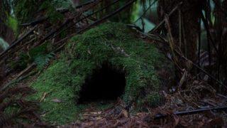 【海外ドラマ】ウォーキング・デッド シーズン10第8話「取引」見所(ネタバレ)